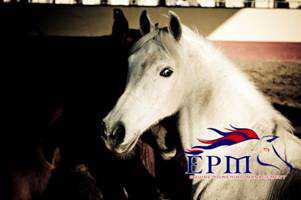 Formazione assistita con i cavalli