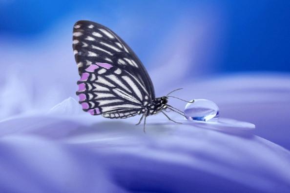 brucofarfalla